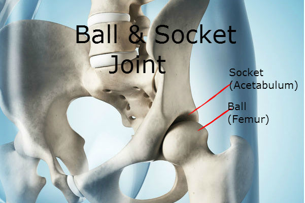 Ball & Socket Hip Joint: Hip Impingement Test: Why Do I Have Hip Pain: Downtown Toronto Chiropractor