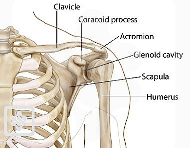 Coracoid Process attaches to the pectoralis minor. A tight pec minor contributes to a unstable shoulder. | Dr Ken Nakamura Downtown Toronto Chiropractor
